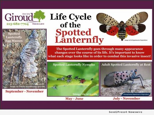 news:-everything-you-need-to-know-about-spotted-lanternfly
