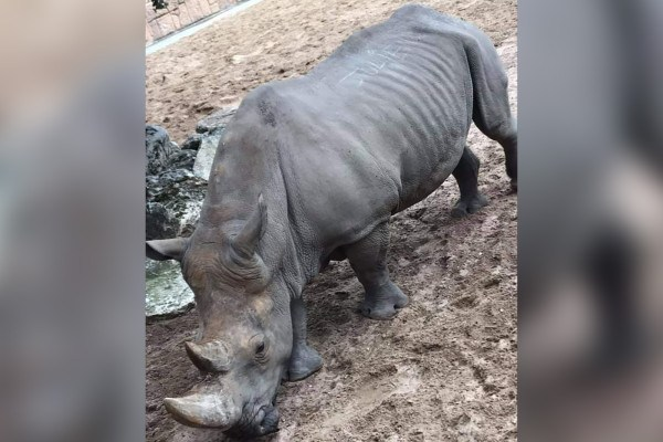 vandals-carve-their-names-into-a-rhino's-back-at-french-zoo