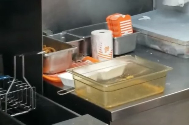 video-shows-rodent-leaping-into-deep-fryer-at-whataburger