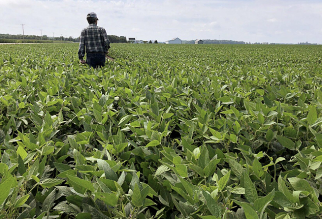 'we-believe-him':-desperate-farmers-blame-usda-–-not-trump-–-for-their-problems