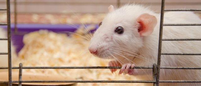matthies:-i-survived-a-deadly-disease-—-millions-wasted-on-animal-experimentation-didn't-save-me