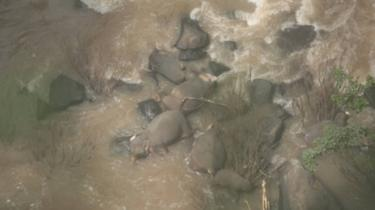 six-elephants-die-trying-to-save-each-other-at-thai-waterfall