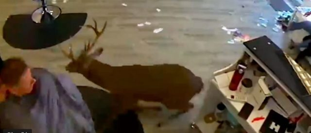 salon-goers-in-long-island-got-quite-the-scare-after-a-deer-crashed-through-the-front-window
