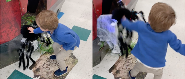 toddler-brawls-with-halloween-spider-in-hilarious-video