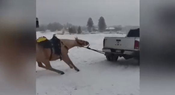horse-tied,-pulled-behind-truck-sparks-animal-abuse-investigation