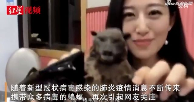 chinese-government-forces-tv-host-who-popularized-eating-bats-to-apologize