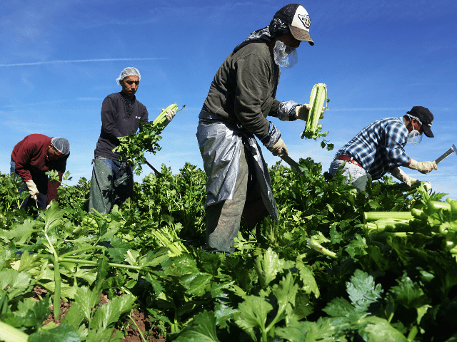 trump:-'we're-not-going-to-have-farms'-without-h-2a-foreign-visa-workers