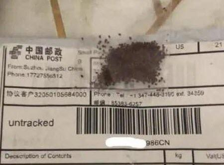 """tens-of-thousands""-received-china-mystery-seeds-in-the-mail,-and-many-planted-them"