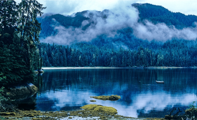 greedy,-insensitive-repubs-to-build-new-roads-in-protected-tongass-national-forest!