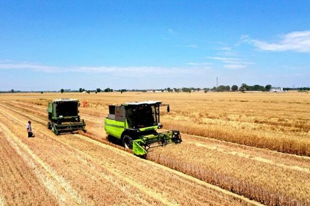chinese-farmers-hoard-wheat-in-hopes-of-creating-shortages-that-push-prices-higher