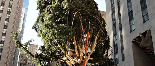 rockefeller-center-hits-back-after-being-slammed-for-christmas-tree's-scraggly-appearance