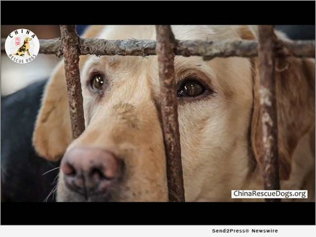 news:-a-gofundme-page-is-now-live-to-help-china-rescue-dogs-with-transporting-rescue-dogs-|-citizenwire