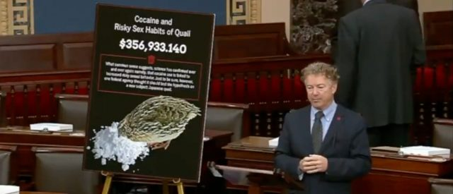sen.-rand-paul-whips-the-props-out-to-go-over-costly-research-into-'cocaine-and-risky-sex-habits-of-quail'