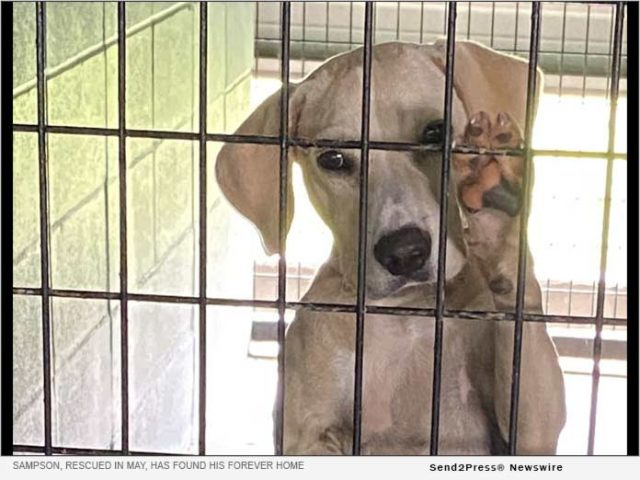 news:-mt.-pleasant-animal-shelter-partners-in-massive-pet-transport-from-el-paso-to-california,-new-jersey,-wisconsin- -citizenwire
