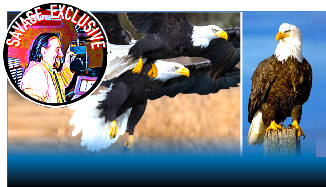 'we-are-the-eagle'-–-why-i-am-a-conservationist