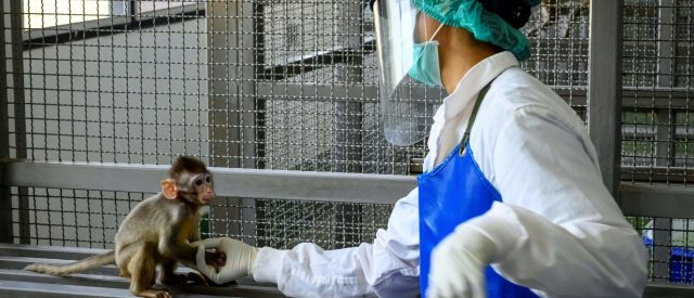 nih-spent-$140-million-on-animal-testing-in-foreign-countries-last-year,-watchdog-group-finds