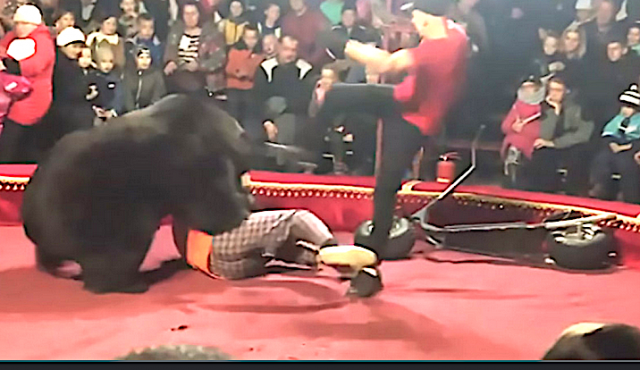 bear-mauls-circus-trainer-twice-in-front-of-horrified-crowd,-circus-denies-it