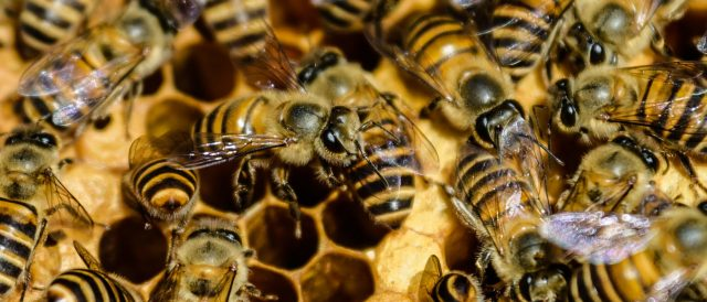 bees-from-massive-100-pound-hive-attack-and-kill-man,-injure-five-others