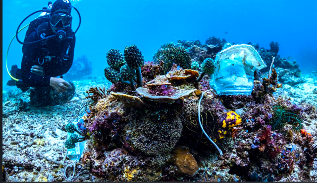 nearly-1.6-billion-disposable-masks-polluted-oceans-in-2020,-will-take-450-years-to-decompose